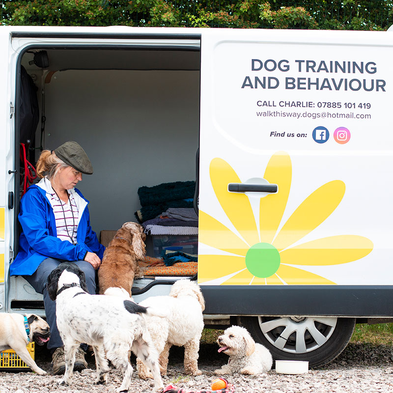Brand photography for Walk This Way - Dog Training and Behaviour Specialist